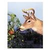 DeWitt G-DDF7350 DeWitt Deer Fence Netting