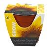 Buzzy Inc 95532 Sunflower Grow Kit