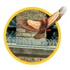 Bird-X SP-25 Bird Repellant Spikes, Pk 25