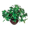 Approved Vendor T7901 Ivy Plant, Silk, 7 In.